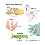 Different Ways of Breathing in Animals Prints