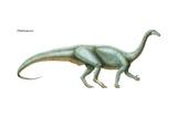 "Plateosaurus, ""Flat Lizard,"" a Late Triassic Herbivore Prints"