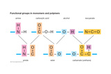 Functional Groups in Monomers and Polymers Obrazy