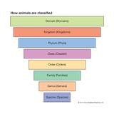 Pyramid of Animal Classification Prints