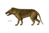 Depiction of the Extinct Genus Hyaenodon Prints