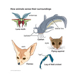 How Animals Sense their Surroundings Poster