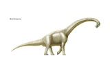 Brachiosaurus, Late Jurassic to Early Cretaceous Dinosaur, One of the Largest, Heaviest Posters
