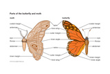 Butterfly and Moth Body Parts Prints