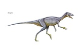 Eoraptor, Late Triassic Dinosaur. This Tiny Carnivore Is Close to What the Common Ancestor Prints