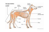 Dog's Skeleton Prints
