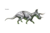 "Triceratops, ""Three-Horned Face,"" Massive Late Cretaceous Herbivore Prints"
