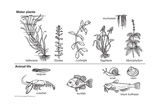 Plant and Animal Life for an Aquarium Art