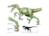 Dromaeosaur Art