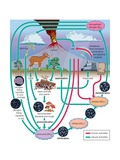 The Circulation of Nitrogen in Various Forms Through Nature, a Process Essential to Life Affiches