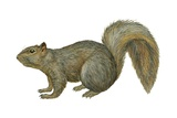 Fox Squirrel Posters
