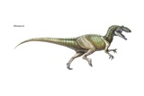 """Allosaurus (""""Other Lizard""""), a Large, Fearsome Predatorial Dinosaur from the Late Jurassic Posters"""