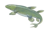 Crossopterygian Poster