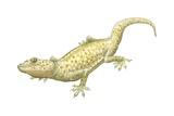 Tokay Gecko Posters
