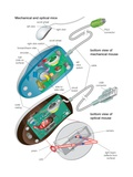 The Bottom Views of a Mechanical and an Optical Mouse, Detailing their Components Posters