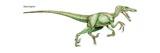 "Velociraptor, ""Quick Plunderer,"" a Ferocious Late Cretaceous Predator Art"