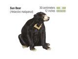 Sun Bear (Helarctos Malayanus) Posters