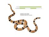 Oriental Coral Snake (Calliophis Japonicus Sauteri) Art
