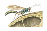 Tenant Wasp Posters