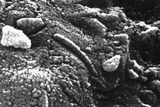 Photomicrograph of Martian Meteorite Alh84001 Photographic Print