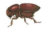 European Elm Bark Beetle Prints