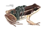 Rocket Frog Print