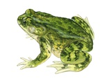 Green Toad Print