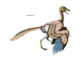 """Archaeopteryx, the """"Feathered"""" Dinosaur of the Late Jurassic Period Print"""