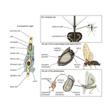 The Auditory System in Different Types of Insects Print
