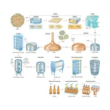 The Brewing Process, Which Turns Barley and Hops into the Alcoholic Beverage of Beer Póster
