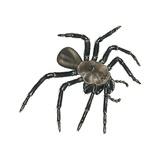 Californian Trap-Door Spider Art