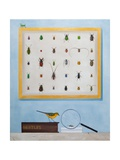 Beetle Mania, 2012-13 Giclee Print by Rebecca Campbell