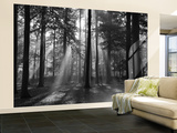 Forest in the Morning Wallpaper Mural Veggoverføringsbilde