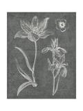 Eden Spring II Gray Posters by Hugo Wild