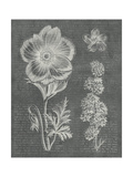 Eden Spring I Gray Prints by Wild Apple Portfolio