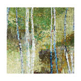 Woodland Birch Giclee Print by Alexys Henry