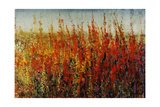 Wildflowers in Summer Giclee Print by Tim O'toole