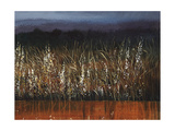 Willows Edge Giclee Print by Tim O'toole
