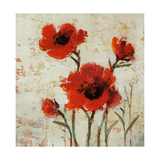 Crimson Poppies II Giclee Print by Tim O'toole