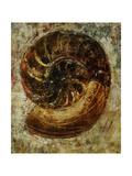 Jodi Maas - Seashells IX Digitálně vytištěná reprodukce