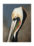 Pelican Bay Giclee Print by Sydney Edmunds