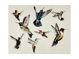 Bevy of Birds Giclee Print by Sydney Edmunds