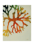 Seaweed III Giclee Print by Kari Taylor