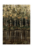 Birch Trees Giclee Print by Sydney Edmunds