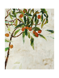 Kumquat Tree Giclee Print by Jodi Maas