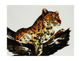Safari Series I Giclee Print by Sydney Edmunds
