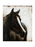 Brown Stallion Giclee Print by Rikki Drotar