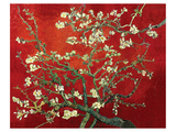 Almond Branches in Red Print