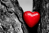 Red Heart in a Tree Trunk. Romantic Symbol of Love, Valentine's Day. Black and White with Red. Photographic Print by PHOTOCREO Michal Bednarek