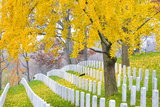 Arlington National Cemetery near to Washington Dc, in Autumn Photographic Print by  Orhan